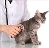 Ветеринарные клиники в Калачинске